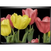 Glas schilderij Tulpen | Geel, Rood, Zwart