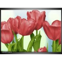 Glas schilderij Tulpen | Rood, Groen, Blauw