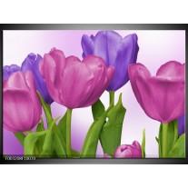Glas schilderij Tulpen | Paars, Roze, Groen