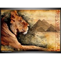 Glas schilderij Leeuw | Bruin, Grijs, Zwart
