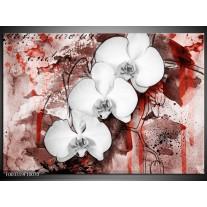 Glas schilderij Orchidee | Wit, Rood
