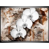 Glas schilderij Orchidee | Wit, Bruin