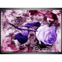 Foto canvas schilderij Roos | Paars, Wit, Roze