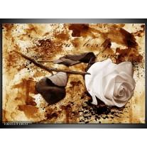 Foto canvas schilderij Roos | Bruin, Wit