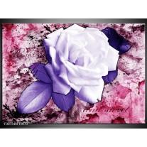 Glas schilderij Roos | Paars, Wit, Roze