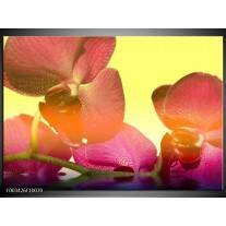 Foto canvas schilderij Orchidee | Geel, Roze, Paars