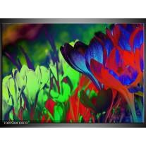 Glas schilderij Krokus | Blauw, Groen, Rood