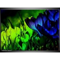 Glas schilderij Krokus | Groen, Blauw, Zwart