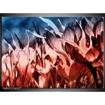 Foto canvas schilderij Bloem | Rood, Blauw, Zwart
