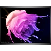 Foto canvas schilderij Roos | Paars, Roze, Zwart