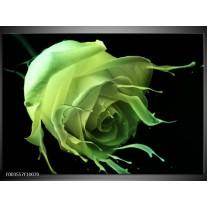 Glas schilderij Roos | Groen, Zwart,