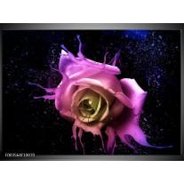 Foto canvas schilderij Roos   Paars, Roze, Zwart