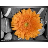 Foto canvas schilderij Bloem | Oranje, Grijs