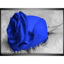 Glas schilderij Roos | Blauw, Grijs, Wit