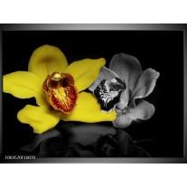 Glas schilderij Orchidee | Geel, Grijs, Zwart