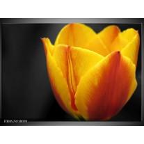 Foto canvas schilderij Tulp | Geel, Oranje, Zwart