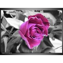 Glas schilderij Roos | Paars, Grijs, Zwart