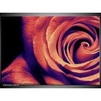 Glas schilderij Roos | Bruin, Zwart