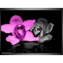 Foto canvas schilderij Orchidee | Paars, Grijs, Zwart