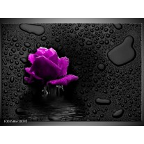 Glas schilderij Roos | Paars, Zwart
