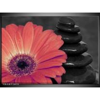 Foto canvas schilderij Bloem | Oranje, Zwart
