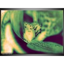 Glas schilderij Macro | Groen, Geel