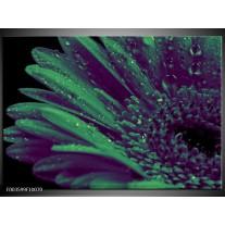 Glas schilderij Bloem   Groen, Zwart