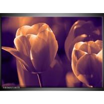 Glas schilderij Tulp | Bruin, Wit