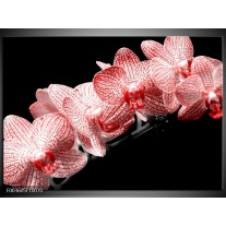 Foto canvas schilderij Orchidee | Rood, Wit, Zwart