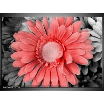 Glas schilderij Gerbera | Rood, Zwart