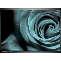 Glas schilderij Roos | Grijs, Zwart