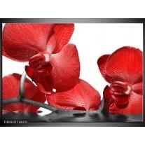 Foto canvas schilderij Orchidee | Rood, Wit