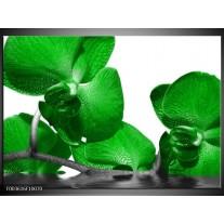 Glas schilderij Orchidee | Groen, Wit, Grijs