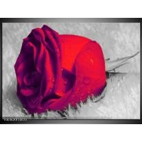 Glas schilderij Roos | Rood, Grijs