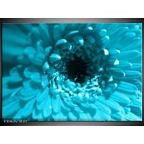 Glas schilderij Gerbera | Blauw, Zwart, Wit