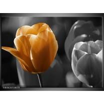 Glas schilderij Tulp | Geel, Oranje, Grijs