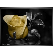 Glas schilderij Roos   Geel, Grijs, Zwart