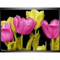 Glas schilderij Tulp | Roze, Geel, Zwart