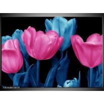 Foto canvas schilderij Tulp   Roze, Blauw, Zwart