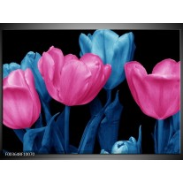 Glas schilderij Tulp | Roze, Blauw, Zwart
