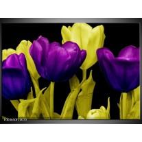 Foto canvas schilderij Tulp | Paars, Geel, Zwart
