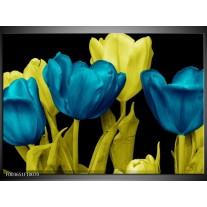 Glas schilderij Tulp | Blauw, Geel, Zwart
