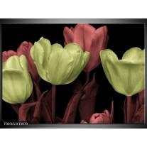 Glas schilderij tulp | Geel, Rood, Zwart