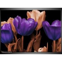 Glas schilderij Tulp | Paars, Bruin, Zwart