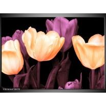 Glas schilderij Tulp | Geel, Paars, Zwart