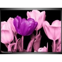 Glas schilderij Tulp | Paars, Roze, Zwart