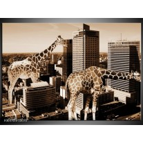 Foto canvas schilderij Giraffe   Bruin, Wit