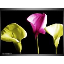Glas schilderij Bloem | Groen, Roze, Zwart