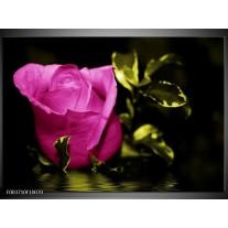 Glas schilderij Roos | Roze, Groen, Zwart