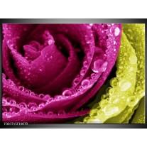 Glas schilderij Paars | Roze, Groen, Wit